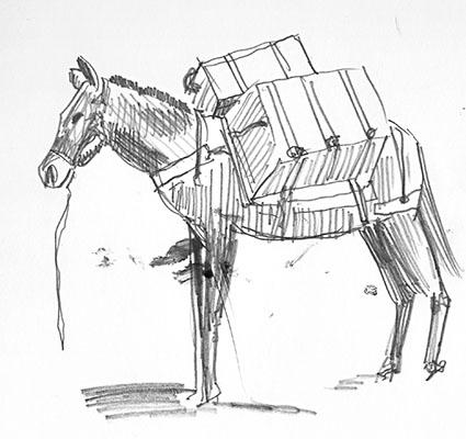 mule bessie.jpg